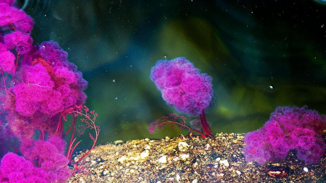 Sắc thái của một trong những dòng sông đẹp nhất thế giới - 3