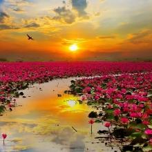 choang ngop truoc bien hoa sung do cua tinh udon thani thai lan