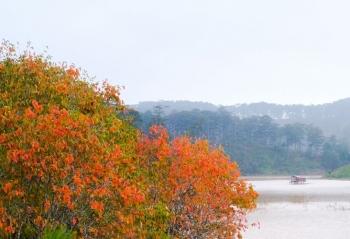 Nhớ mùa thu Đà Lạt