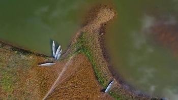 Xanh mát hồ Khe Rưng