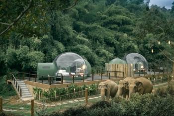 """Phòng ngủ bong bóng, thức dậy giữa rừng và """"chào buổi sáng"""" với voi"""