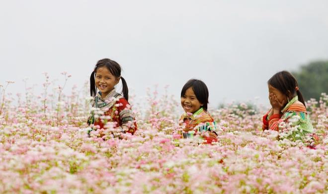 3 địa điểm săn hoa tam giác mạch đẹp hút hồn cho dân mê xê dịch